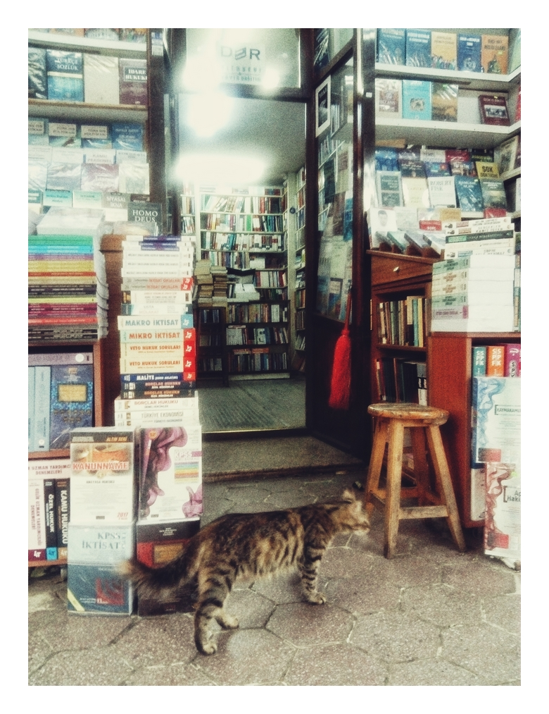 Istanbul, cats, books, Grand Bazaar